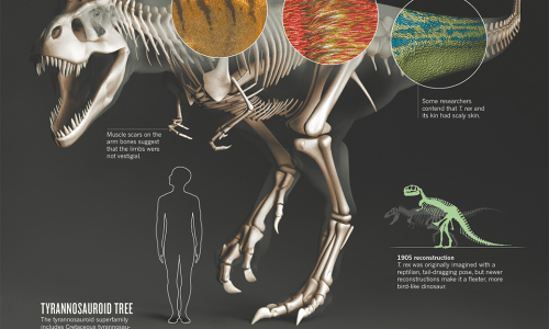 Truth About T-Rex Infographic