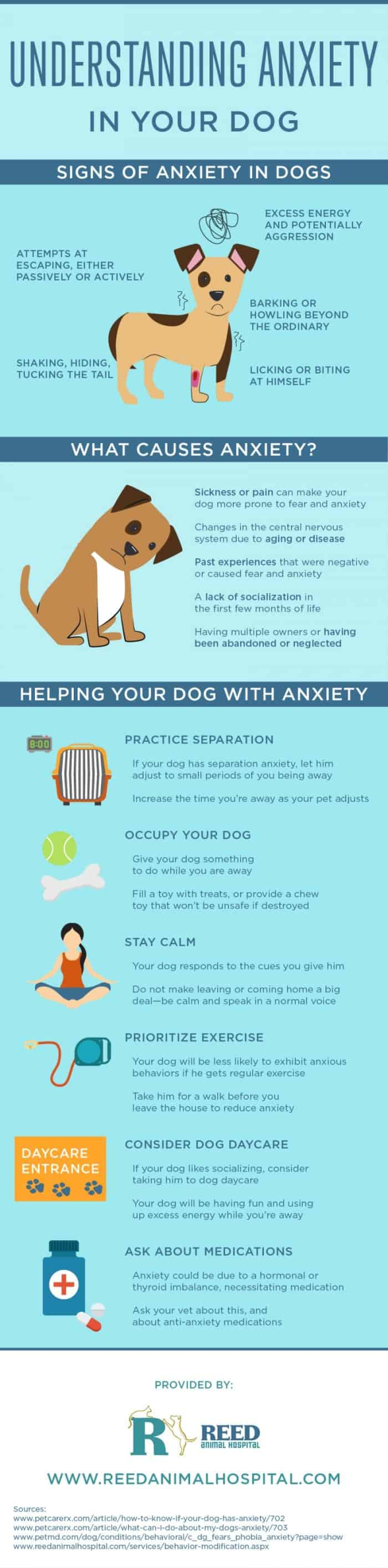 Canine Concern: How To Handle Anxiety In Your Dog | Daily ...
