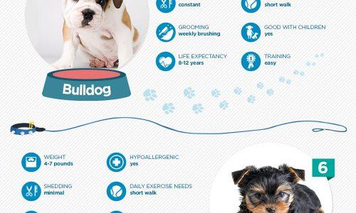 A Breakdown Of The Ten Most Popular Dog Breeds