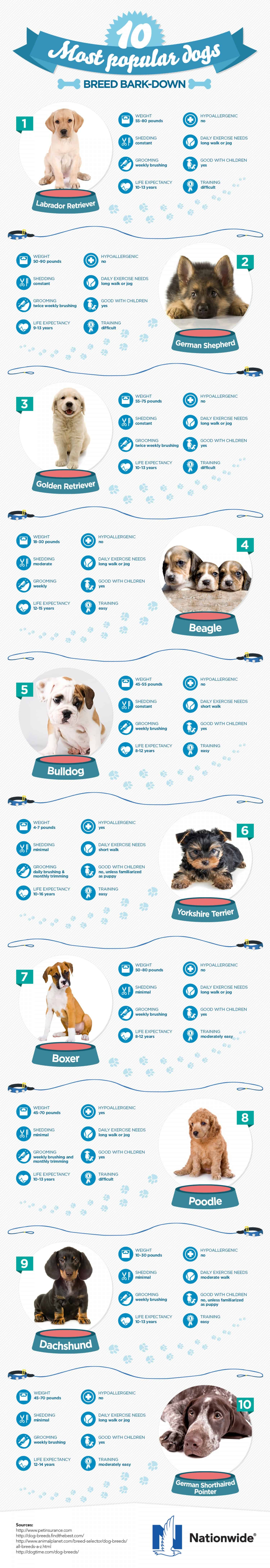 Most Popular Dog Breeds Infographic