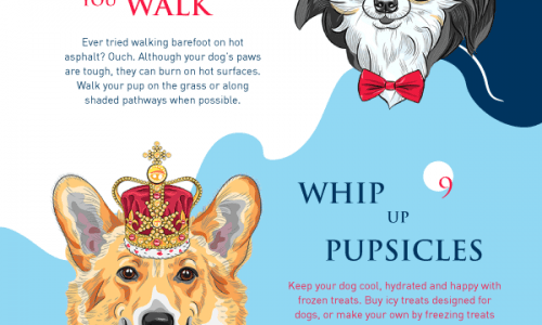 Infographic with 16 ways to help your dog fight the heat