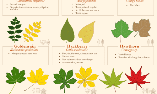 A guide to identifying fall leaves