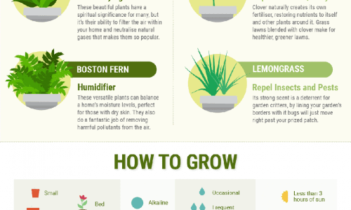 House plants that are beneficial for health