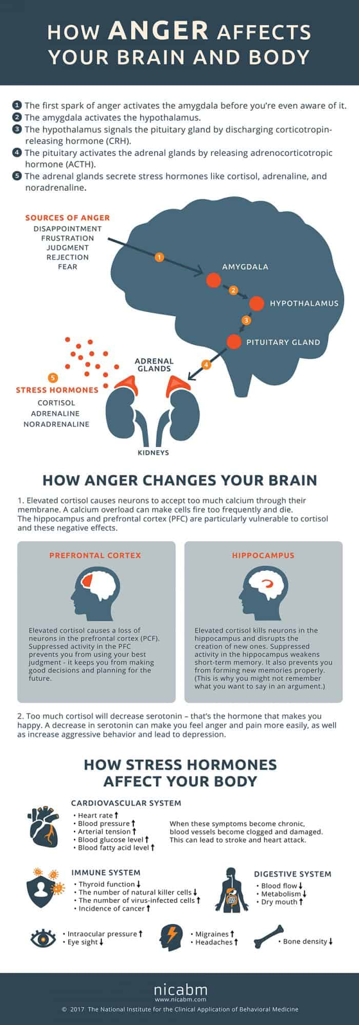 an infographic depicting the potential effects of anger on the brain and body