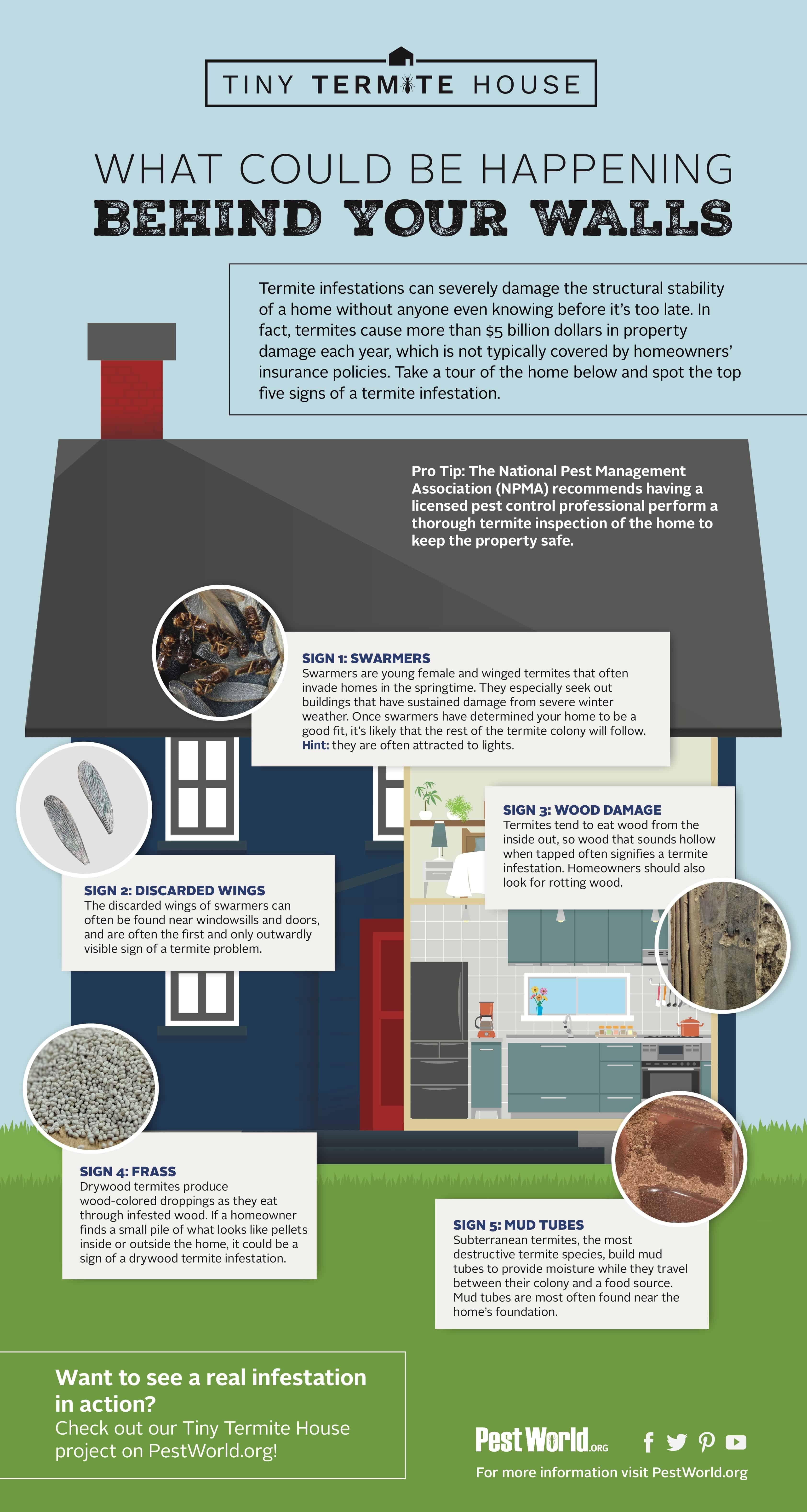 tiny-termite-infographic.jpg
