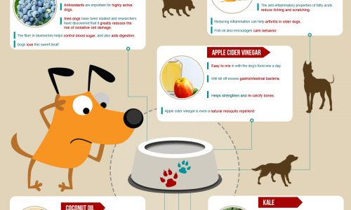 Infographic about Superfoods for Dogs