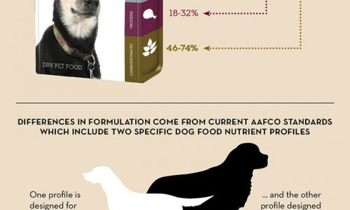 A guide to putting together a dog diet