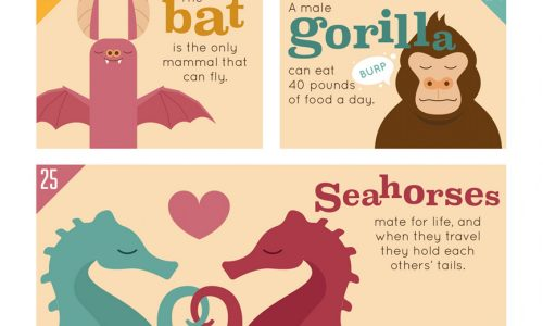 50 animal facts infographic
