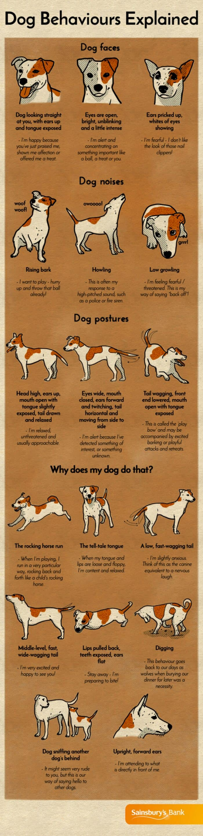 explanation of common dog behaviors including positions and sounds
