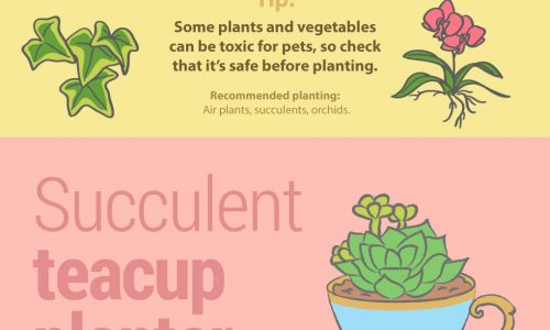 unusual houseplant ideas infographic