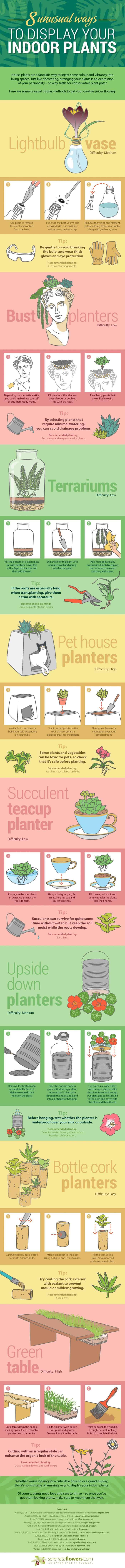 unusual houseplant ideas infographic