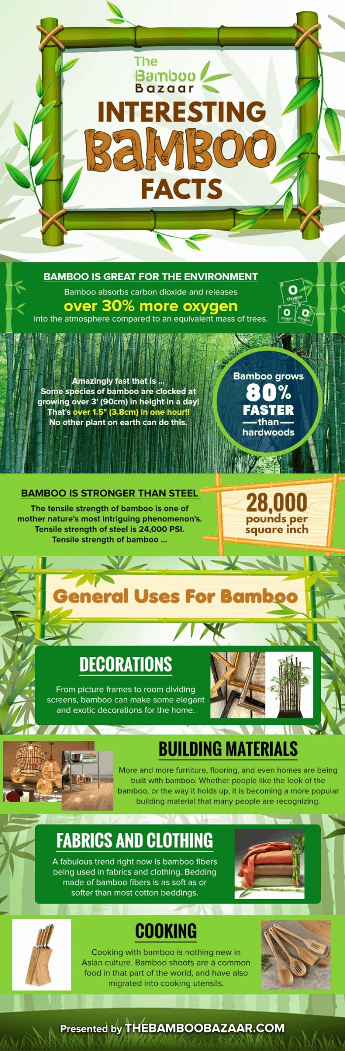 amazing bamboo facts