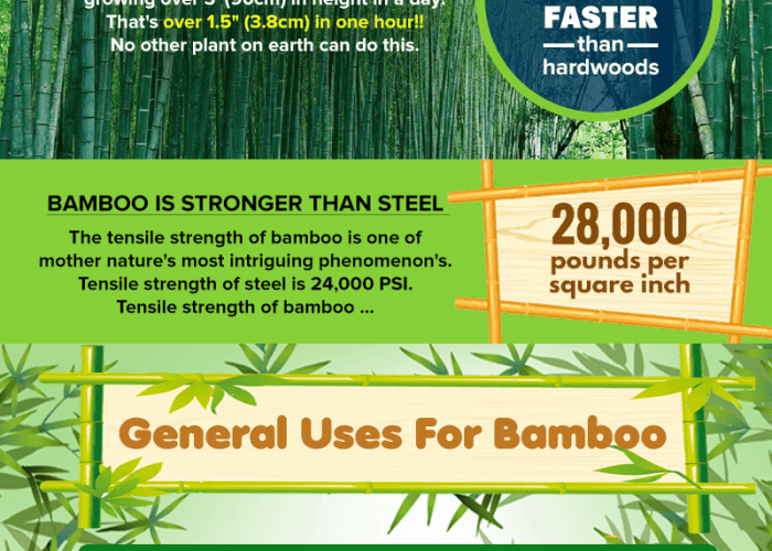 amazing bamboo facts