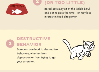 The most commons signs that your cat is bored