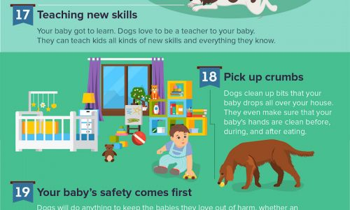 ways dogs accompany babies