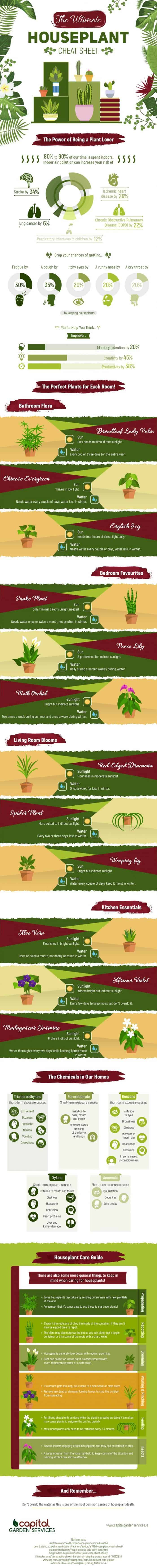 a list of types of houseplants, their benefits, and how to take care of them