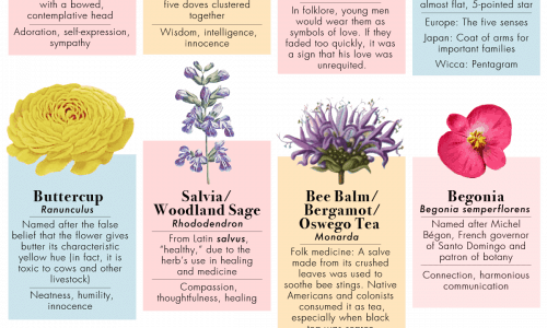 50 Kinds of Flowers and Their Meanings
