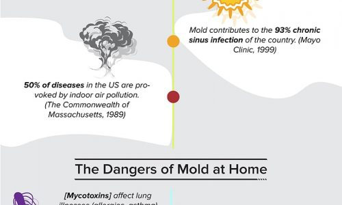 Black Mold Statistics and How to Prevent It