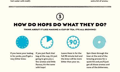 explaining everything about hops from what they're made of to where they come from