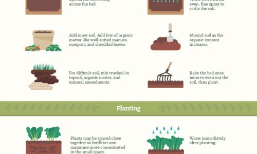 tips on how to grow different kinds of vegetables in gardens