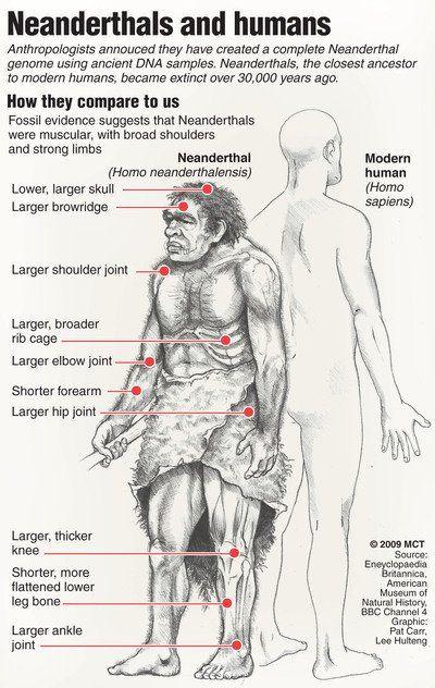 Homo sapiens and Neanderthal compared